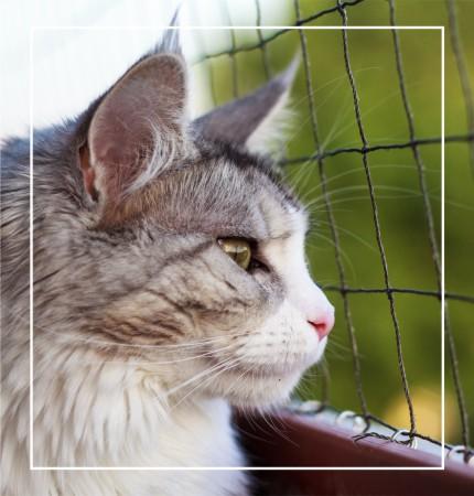 kot i siatka zabezpieczająca na balkonie