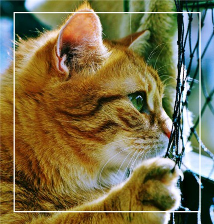 kot na balkonie z siatką zabezpieczającą